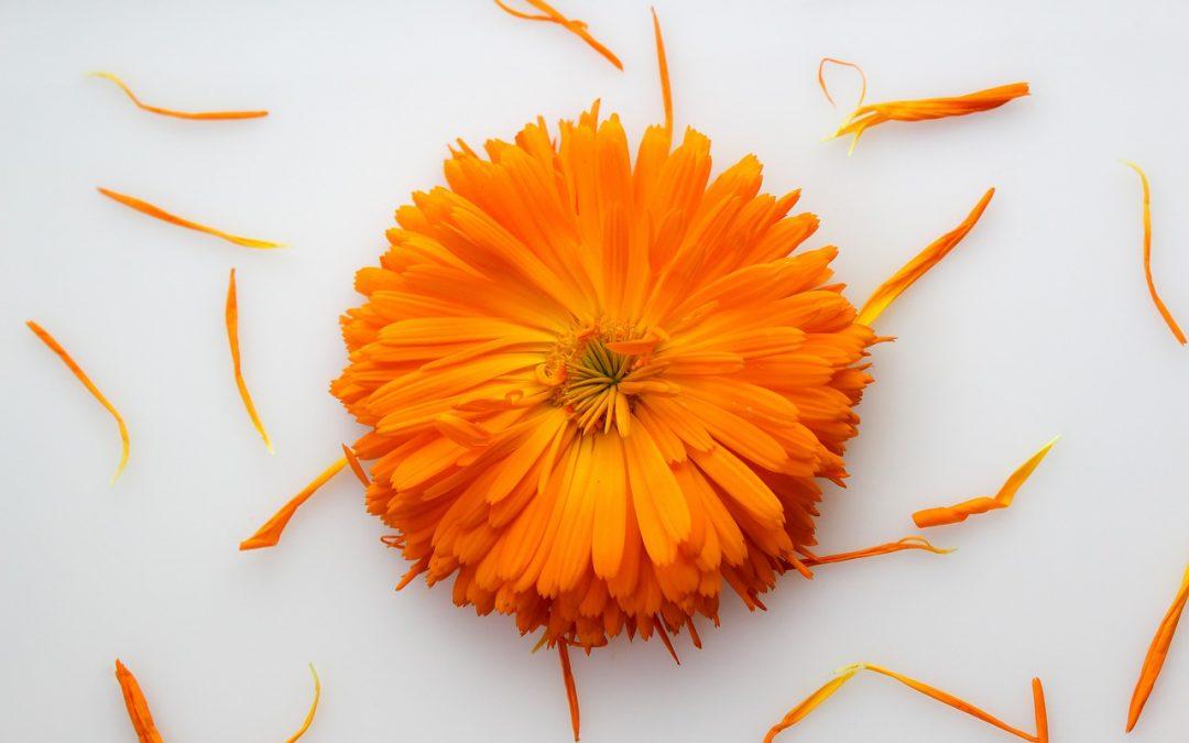 Körömvirág krém: egyenesen a természet virágoskertjéből